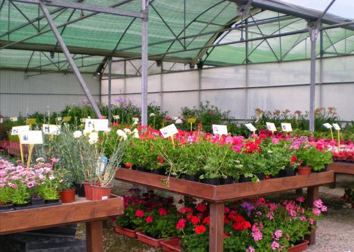 Jardiner a benages vivero y servicios de jardiner a en for Viveros de arboles frutales en chihuahua